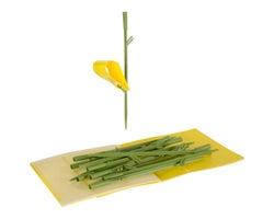 Pièges à insectes pour plantes d'intérieur(Paquet de 12)