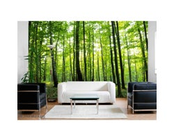 15 ft. x 8 ft. Sunny Forest Wallpaper Mural