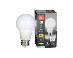 Ampoule DEL A19 Blanc froid 9 W