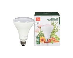 Ampoule-réflecteur DEL pour plantes BR30 8 W