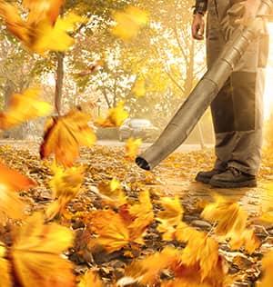 Fall Work